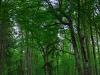Puszcza Białowieska ostatni pierwotny las Europy