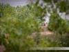 Płocka Ścieżka Biegowa 2012