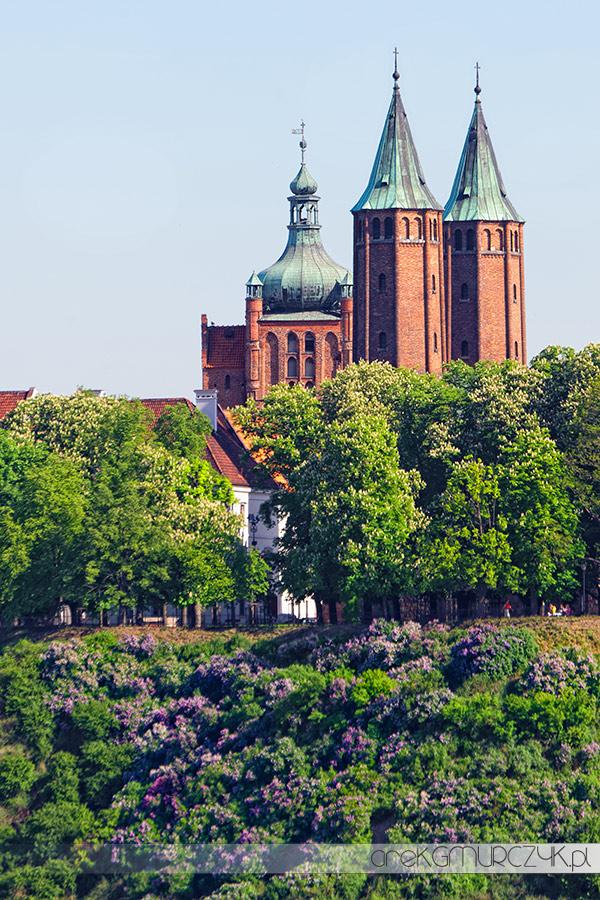 Katedra Płock zdjęcia