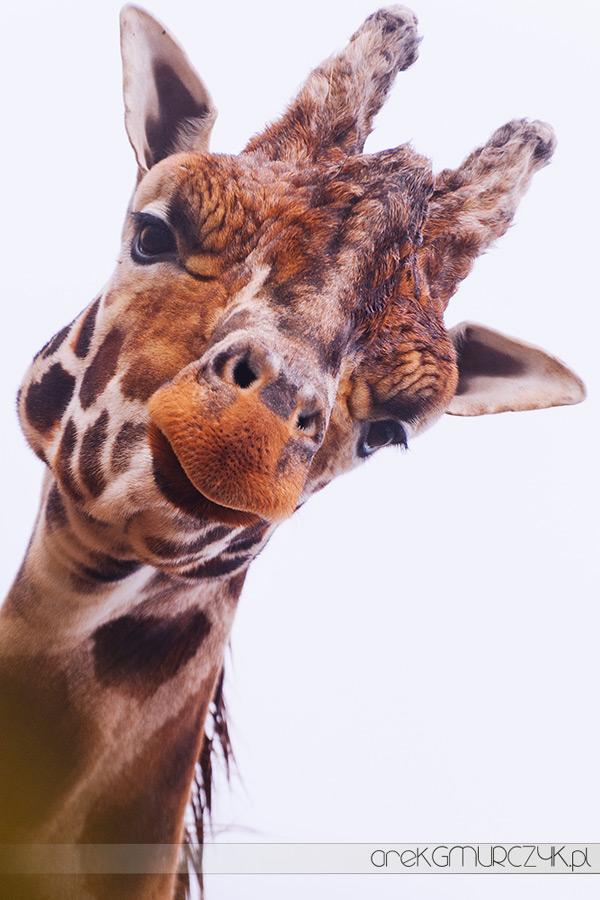 zoo_plock