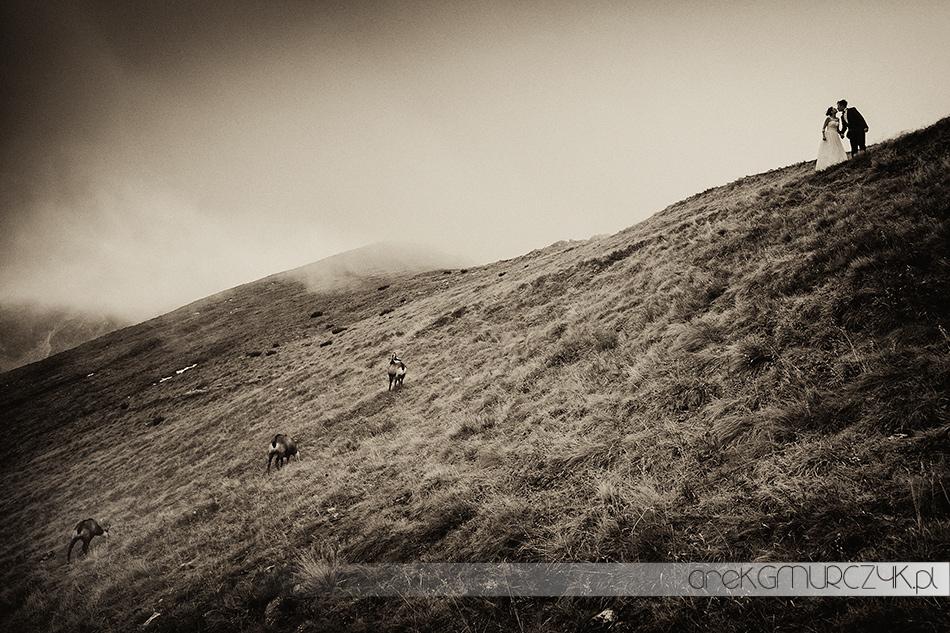 sesja ślubna w górach z kozicami